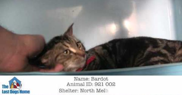 Bardot Is A Sweet And Beautiful Girl With Fur As Soft As Silk A Confident Cat Who Is Very Content To Stay Close To People S Losing A Dog Cat Adoption