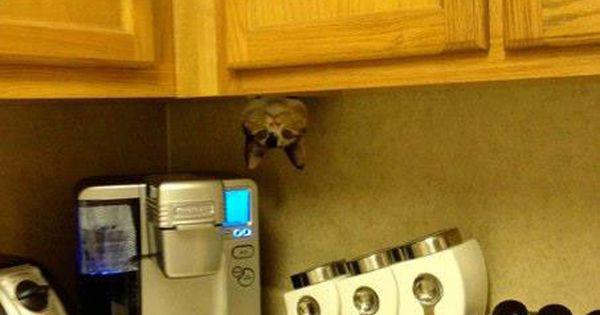 ninja cat in the kitchen