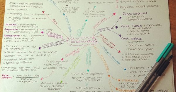 Concept Mapping is an awesome strategy or studying.