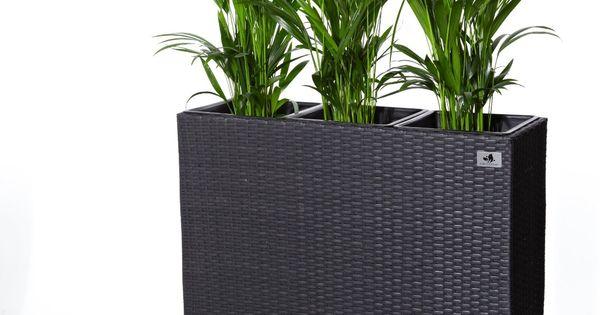 gartenfreude pflanzk bel raumteiler polyrattan inkl 3. Black Bedroom Furniture Sets. Home Design Ideas
