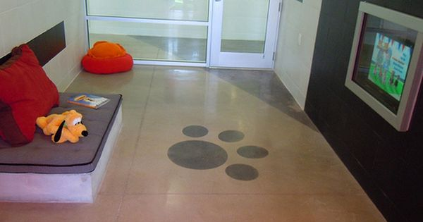 Basics Of Worry Free Pet Boarding At Disney S Newly Opened Best