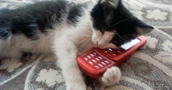 Call Me Maybe Via Funny Cats Http Www Funnycatpictures Net