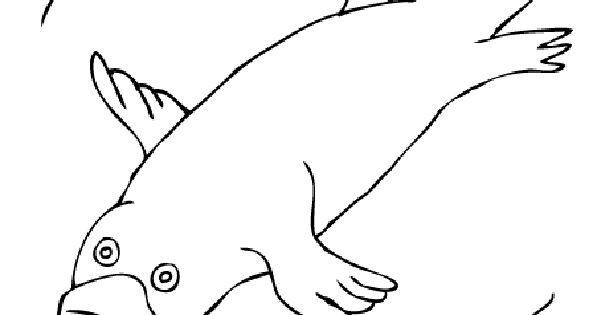 Duck billed platypus drawing platypus coloring pages for Duckbill platypus coloring page