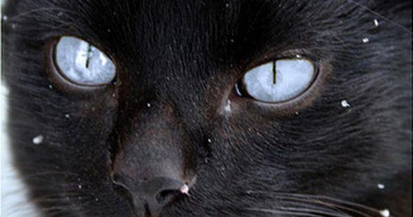 Cat - cute picture
