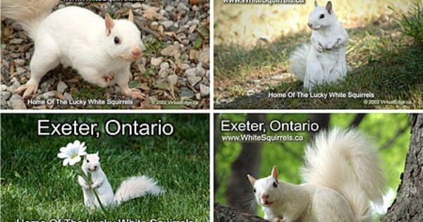Skwerlpreneurs Com Squirrel Home Exeter Animals