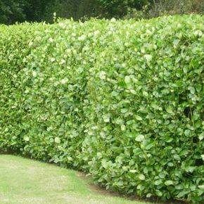 Griseline | Small gardens, Outdoor landscaping, Garden