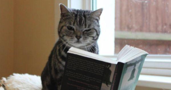 Pin By Letiziana On Ha Ha Ha S Cat Reading Cats Cat Books