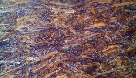 Stained Osb Floor Subfloor Pinterest Osb Sheets