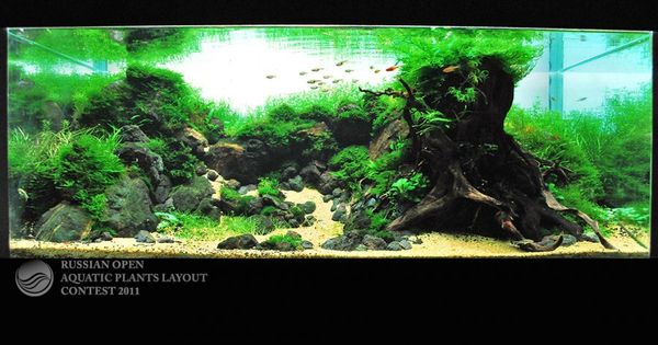 Fish tank decor for the home pinterest fish tank for Aquarium for home decoration