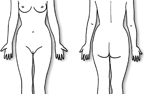 body diagram form female