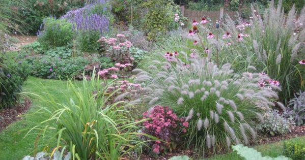 echinacea gr ser sedum madiona garden pinterest. Black Bedroom Furniture Sets. Home Design Ideas