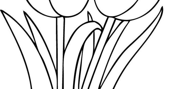best-coloring-simple-tulip-outline-picture-hd-hd-coloring ...
