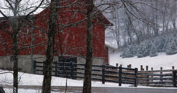 barn, snow, fence & Christmas trees