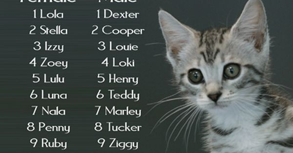 Do You Know The Meaning Of Your Girl Kitten Names Check Out This Big List Kitten Names Cute Cat Names Girl Cat Names