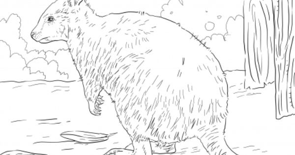 Quokka Coloring SheetsColoringPrintable Coloring Pages Free Download
