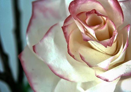 Coffe Filter Rose Tutorial
