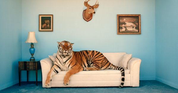 Check out this article about keeping wild animals as pets and the