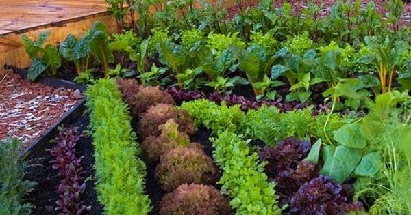Vegetable/Herb Garden next to deck