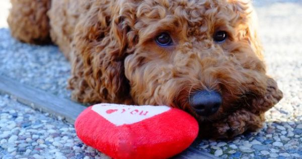 veterinaire valentine marseille