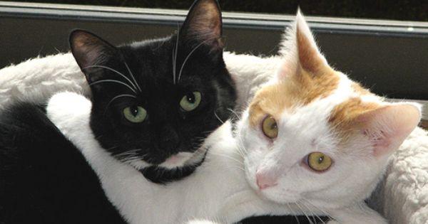 Kitty Hugs Black Cat Appreciation Day Hug Your Cat Day Cats