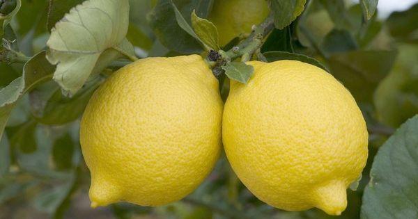 Lemon, Lemon water and The farmer on Pinterest