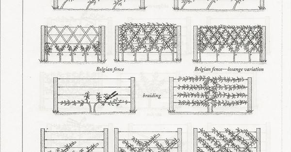 Ideen f r spaliere genial als essbaren sichtschutz for Insektenschutznetz garten
