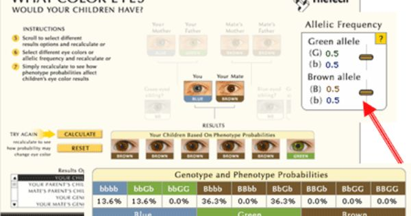 Understanding Genetics Eye Color Predictor Eye Color Genetics