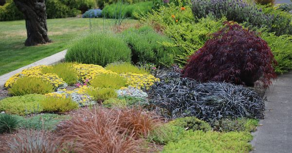 Ornamental Grasses Victoria Bc : Winter is a good time to think of your garden design