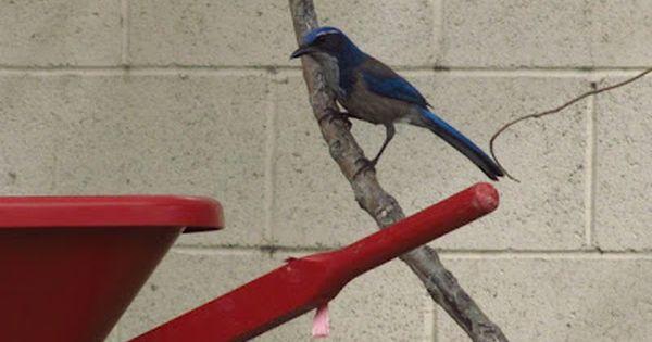 Go Explore Nature: Kid-Friendly Tips for Backyard Bird Watching