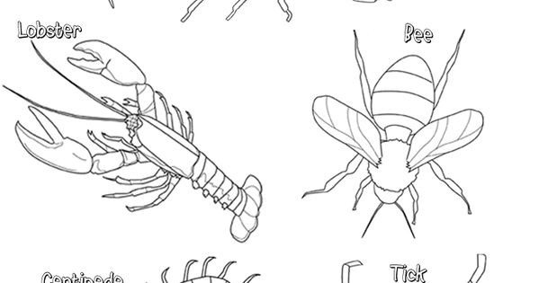 Arthopod Coloring Phylum Arthropoda Pinterest