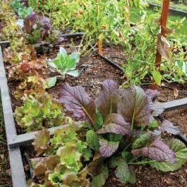 d56b02883ded7464a178b88a328cd3ef - Vegetable Gardening In The Desert Southwest