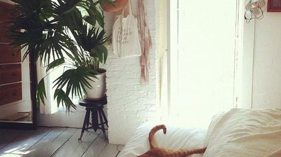 Moon to Moon: Cozy White Warm Bohemian Bedrooms ..... | House Cat | Pinterest | Bohemian, Moon ...