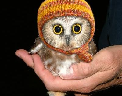 Aww this little owl looks so cute!! Owl Animals Little Adorable BigEyes