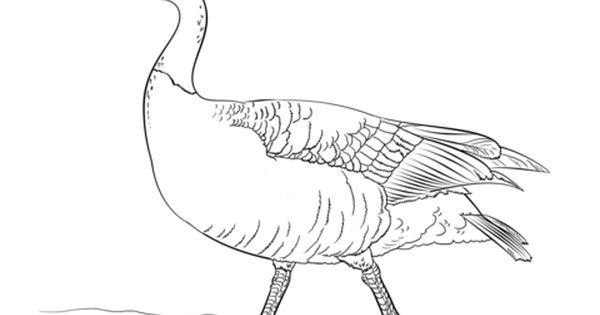 Canadian Goose Walking Coloring Page From Gooses Category Select