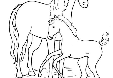 Horse Coloring Pages | HORSE CRAFTS | Pinterest | Horse ...
