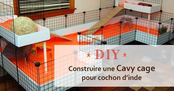 comment construire une cavy cage pour cochon d inde guinea pig cages pinterest cavy. Black Bedroom Furniture Sets. Home Design Ideas