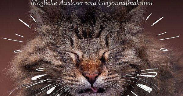 30 Katzenfakten Auch Katzen Niesen Hin Und Wieder Wie Beim