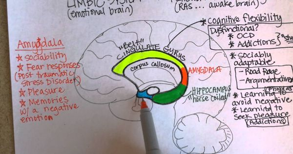 Limbic System, Part 1 [ 20 Mar 2013 ] | Brain Functions ...