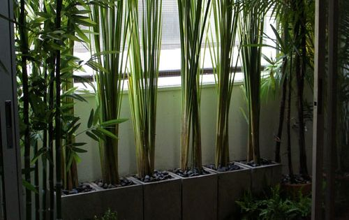Bambou idee Balcone : Balcons, Potager de balcon and Bambou on Pinterest