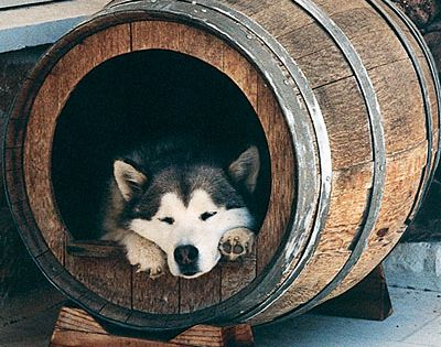 Upcycled wine barrel dog house. would be better if it were a