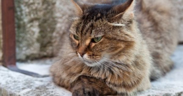 Keeping Your Senior Cat Healthy Cat Breeds Cool Cats Cat Lifespan