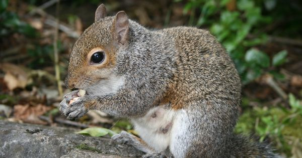 How To Get Rid Of Squirrels Methods For Repelling Squirrels Hard Work Squirrel And Plants