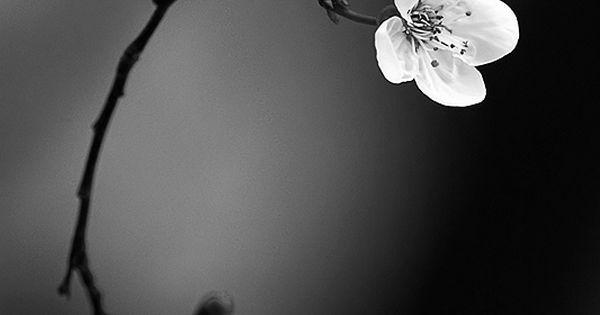 Sakura (cherry blossom) by Jasmina Gorjanski