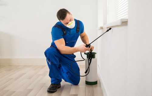 Free Your Attic Of Animal Droppings Bed Bugs Treatment Bed Bug Extermination Bed Bugs