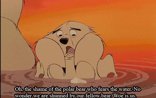 Oh The Shame Of The Polar Bear Who Fears The Water -8950