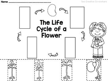 Picture With Images Plants Worksheets Plant Life Cycle