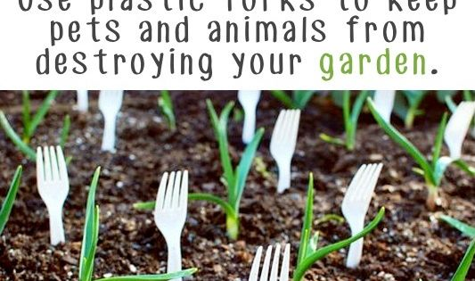 20 Insanely Clever Gardening Tips And Ideas: The people who bought my