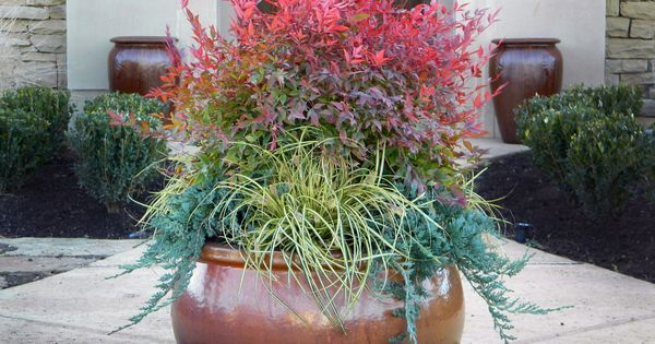 Love this for fall container, gardening, landscaping, landscape architecture, landscape design