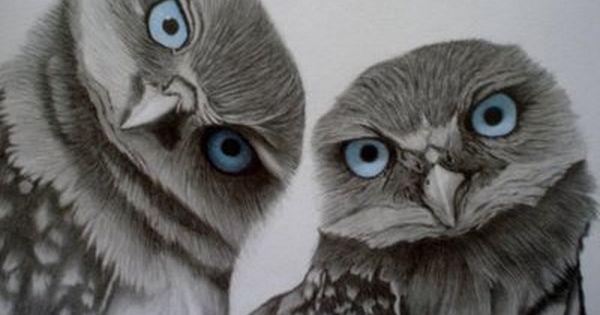 Blue eyed owls - Birds