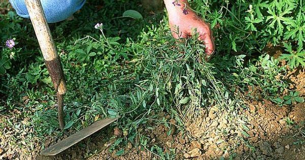 3 astuces contre les mauvaises herbes - Eau bouillante mauvaises herbes ...